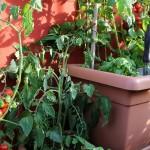 Orto sul balcone: guida per crearlo