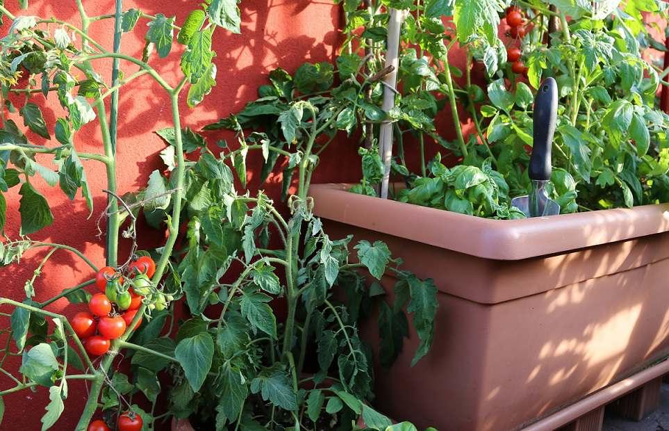 Connu Orto In Terrazzo Fai Da Te. Cool Orto Sul Balcone Verdure E Piante  RE85